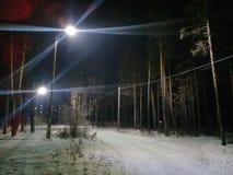Φανάρια στο δασικό δίνοντας έντονο φως στοκ εικόνες