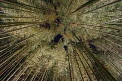 Φανάρι και ελαφρύ φεστιβάλ στην περιοχή Arashiyama Στοκ Εικόνα
