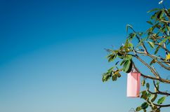 Φανάρι υφάσματος στο δέντρο plumeria Στοκ φωτογραφίες με δικαίωμα ελεύθερης χρήσης