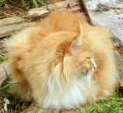 Φανείτε μακριά γάτα Στοκ φωτογραφίες με δικαίωμα ελεύθερης χρήσης