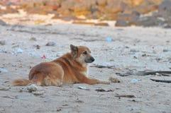 Φανείτε προς τα εμπρός σκυλί Στοκ Φωτογραφίες