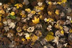 Φαντασία άδειας φθινοπώρου Στοκ εικόνα με δικαίωμα ελεύθερης χρήσης