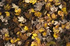 Φαντασία άδειας φθινοπώρου Στοκ Εικόνες