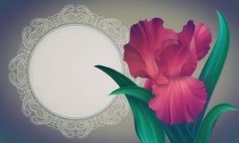 Φαντασία η κόκκινη Iris στο ζωηρόχρωμο σκηνικό με το εκλεκτής ποιότητας πλαίσιο FO δαντελλών Στοκ Εικόνες