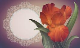Φαντασία η πορτοκαλιά Iris στο ζωηρόχρωμο σκηνικό με το εκλεκτής ποιότητας πλαίσιο δαντελλών Στοκ Φωτογραφίες