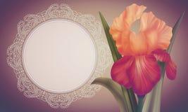 Φαντασία η πορτοκαλιά Iris στο ζωηρόχρωμο σκηνικό με το εκλεκτής ποιότητας πλαίσιο δαντελλών Στοκ φωτογραφία με δικαίωμα ελεύθερης χρήσης