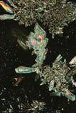 Φαντασία κρυστάλλου Στοκ Φωτογραφία