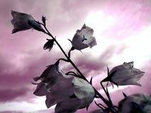 Φαντασία τέχνης φύσης Στοκ εικόνα με δικαίωμα ελεύθερης χρήσης