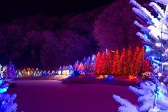 Φαντασία Χριστουγέννων - δέντρα chrismas στα φω'τα Στοκ Εικόνες