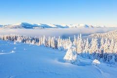 Φανταστικά δέντρα που καλύπτονται με το άσπρο χιόνι Στοκ Εικόνα