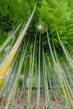 Φανταστικά δασικά δέντρα μπαμπού που στέκονται ψηλά Στοκ εικόνες με δικαίωμα ελεύθερης χρήσης