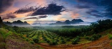 Φανταστική οθόνη της ομίχλης το πρωί Στοκ Εικόνες