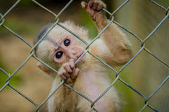 Φανταστική φωτογραφία κινηματογραφήσεων σε πρώτο πλάνο εύθυμου χαριτωμένου λίγος πίθηκος από τη ζούγκλα Ισημερινός της Αμαζώνας Στοκ εικόνα με δικαίωμα ελεύθερης χρήσης
