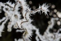 Φανταστικοί σχηματισμοί πάγου Στοκ φωτογραφία με δικαίωμα ελεύθερης χρήσης