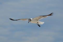 Φανταστικός πετώντας γλάρος στους νεφελώδεις ουρανούς στους τροπικούς κύκλους Στοκ φωτογραφία με δικαίωμα ελεύθερης χρήσης
