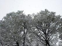 Φανταστικός χειμώνας στα Ουράλια Στοκ Φωτογραφία