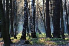 Φανταστικό δάσος πρωινού την άνοιξη Στοκ εικόνα με δικαίωμα ελεύθερης χρήσης