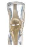 Φανταστικό γόνατο ακτίνας X Στοκ Φωτογραφία