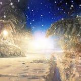φανταστικό τοπίο χιονισμένα δέντρα που καίγονται από το φως χειμώνας ανασκόπησης θαυμάσιος Στοκ εικόνα με δικαίωμα ελεύθερης χρήσης