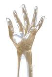 Φανταστικό χέρι ακτίνας X Στοκ φωτογραφία με δικαίωμα ελεύθερης χρήσης