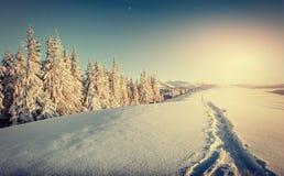 Φανταστικό χειμερινό τοπίο και ποδοπατημένες πορείες στο ηλιοβασίλεμα εκείνο το λιβάδι Στοκ φωτογραφίες με δικαίωμα ελεύθερης χρήσης