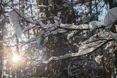 Φανταχτερά ταλαντεύοντας snowdrifts σε ένα δέντρο διακλαδίζονται στο φως του ήλιου Στοκ φωτογραφία με δικαίωμα ελεύθερης χρήσης