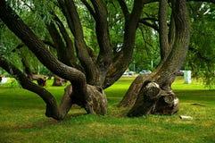 Φανταχτερές μορφές δέντρων στοκ φωτογραφία με δικαίωμα ελεύθερης χρήσης
