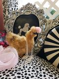 Φανταχτερό κοτόπουλο στοκ εικόνα με δικαίωμα ελεύθερης χρήσης