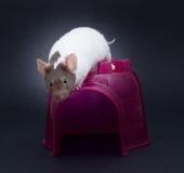 Φανταχτερό ποντίκι Στοκ φωτογραφία με δικαίωμα ελεύθερης χρήσης