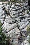 Φαράγγι ξύλων καρυδιάς Στοκ Εικόνες