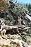 Φαράγγι ξύλων καρυδιάς Στοκ εικόνα με δικαίωμα ελεύθερης χρήσης