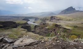 Φαράγγι ποταμών της Ισλανδίας στοκ εικόνες