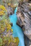 Φαράγγι πτώσεων Athabasca Στοκ Εικόνες