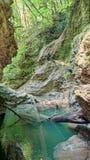 Φαράγγι του ποταμού στο άλσος yew-πυξαριού στοκ φωτογραφία με δικαίωμα ελεύθερης χρήσης