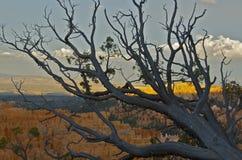 Φαράγγι του Brice Στοκ Εικόνες