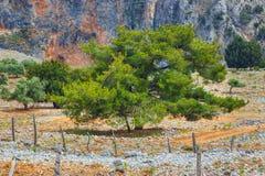 Φαράγγι Aradena, νησί της Κρήτης Στοκ Εικόνες