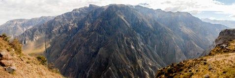 Φαράγγι Colca, πανόραμα του Περού στοκ εικόνα