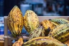 Φασόλια κακάου και φρούτα κακάου Στοκ Εικόνες