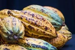 Φασόλια κακάου και φρούτα κακάου Στοκ εικόνες με δικαίωμα ελεύθερης χρήσης