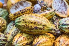 Φασόλια κακάου και φρούτα κακάου Στοκ Εικόνα