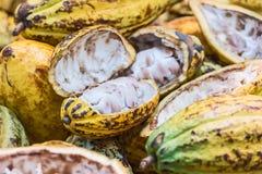 Φασόλια κακάου και φρούτα κακάου Στοκ Φωτογραφίες