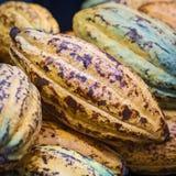 Φασόλια κακάου και φρούτα κακάου Στοκ Φωτογραφία