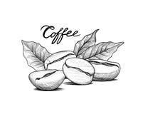 Φασόλια καφέ με τα φύλλα Πιείτε το έμβλημα καφέ Ετικέτα τροφίμων Στοκ Φωτογραφίες