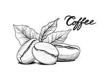 Φασόλια καφέ με τα φύλλα Πιείτε το έμβλημα καφέ Ετικέτα τροφίμων Στοκ Εικόνες