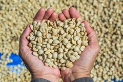 Φασόλια καφέ με το δέρμα περγαμηνής στοκ εικόνες με δικαίωμα ελεύθερης χρήσης