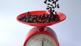 Φασόλια καφέ που περιέρχονται στο ζυγίζοντας δίσκο κόκκινες κλίμακες απόθεμα βίντεο