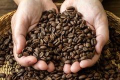 Φασόλια καφέ στα θηλυκά χέρια Στοκ εικόνες με δικαίωμα ελεύθερης χρήσης