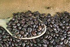 Φασόλια καφέ στο κουτάλι Στοκ Φωτογραφία