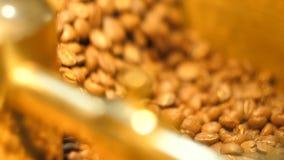 Φασόλια καφέ στο χρυσό μύλο κλείστε επάνω απόθεμα βίντεο