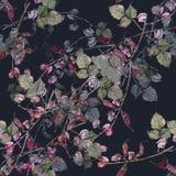 Φασόλι λουλουδιών Watercolor Floral άνευ ραφής σχέδιο σε ένα σκούρο μπλε υπόβαθρο Στοκ Εικόνες